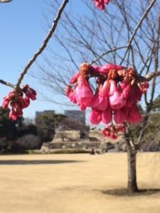 梅と江戸城跡
